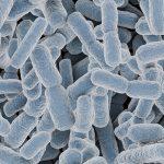 乳酸菌食品を食べると美肌になるの?